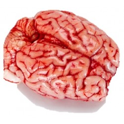 Cervelle d'agneau